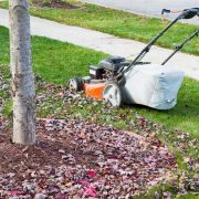 Benefits Of Over Seeding Your Lawn Grass Overseeding