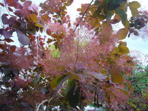 smoke-tree-tree-company-springfield-mo