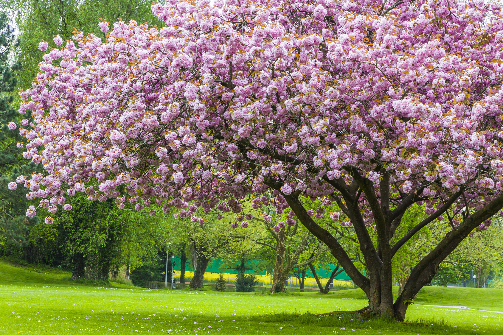Additional Tree Disease Resources (2015) - Tree Service Company Springfield MO