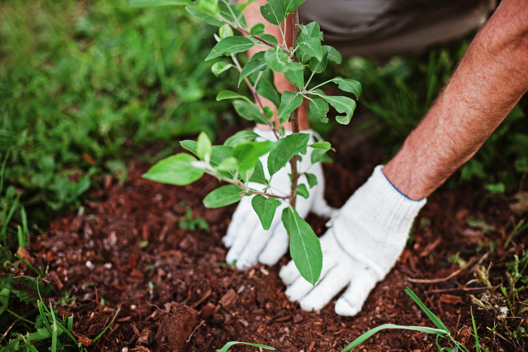 Proper Planting Techniques Handout - Landscape Replacement Springfield MO