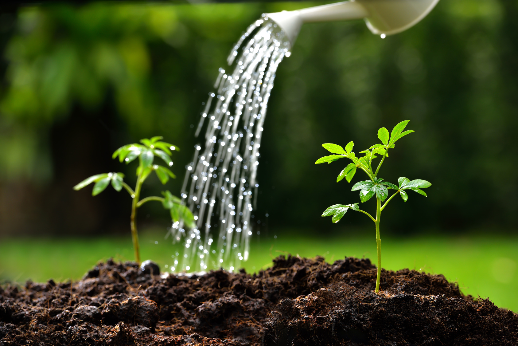 Watering Your New Plants Handout - Water Sprinkler Troubleshooting Springfield MO