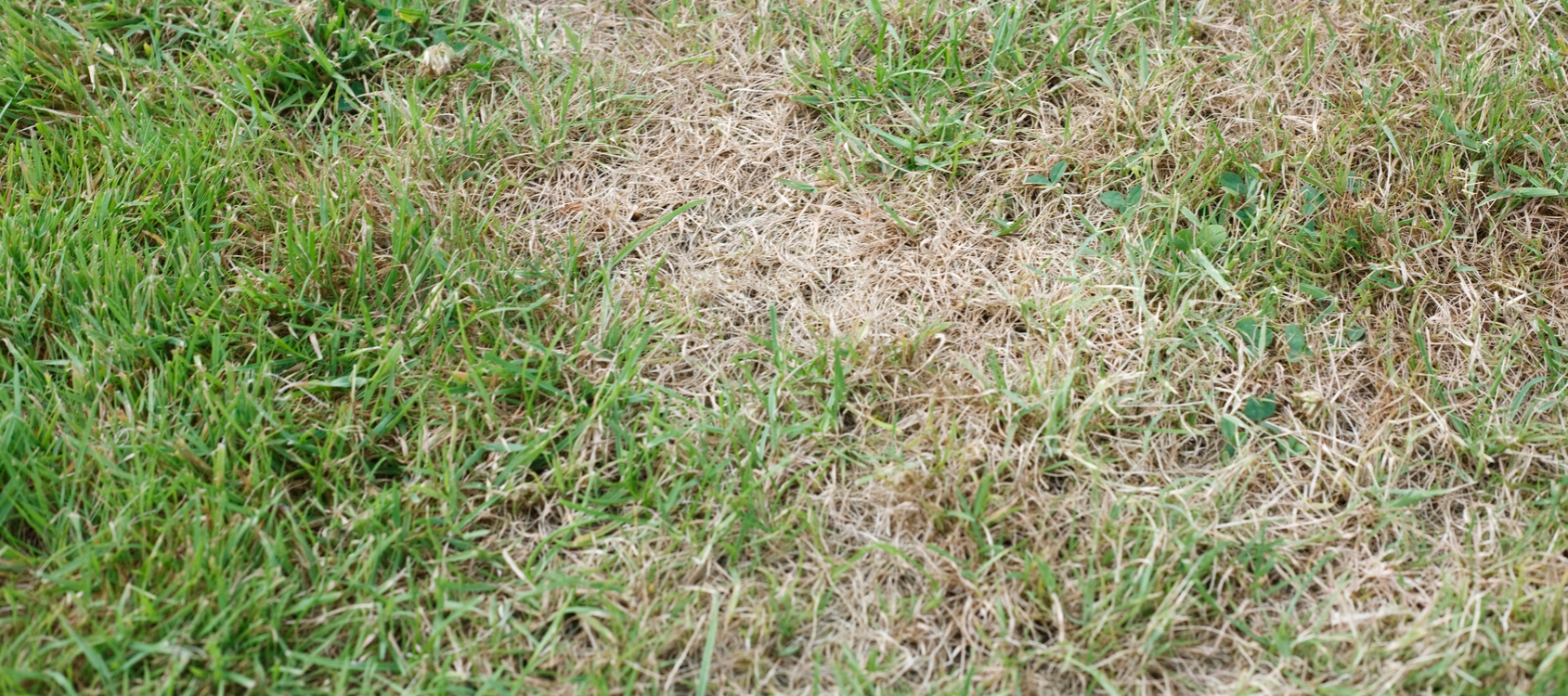 Treating Brown Spots in Your Yard - Lawn Applications Springfield MO