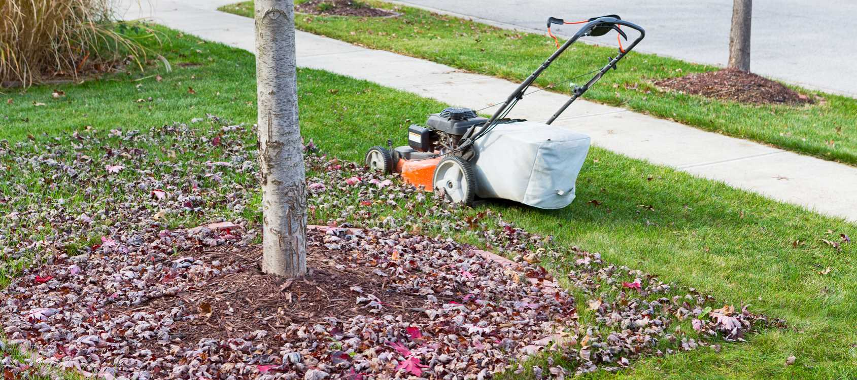 Benefits of Mulching During Leaf Removal Springfield MO