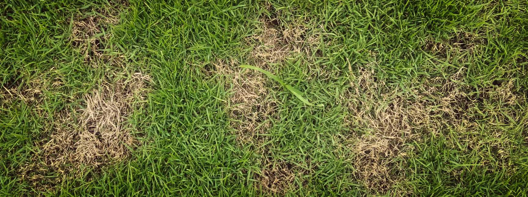 Avoiding Brown Spots In Your Yard - Lawn Care Services Springfield MO