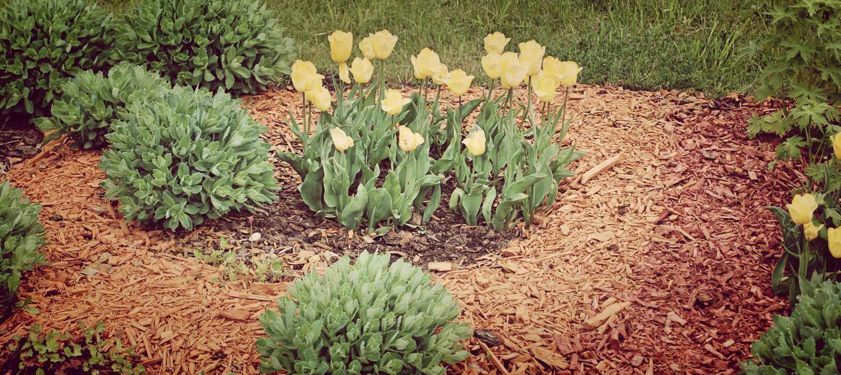Types of Landscape Mulch Installation Springfield MO